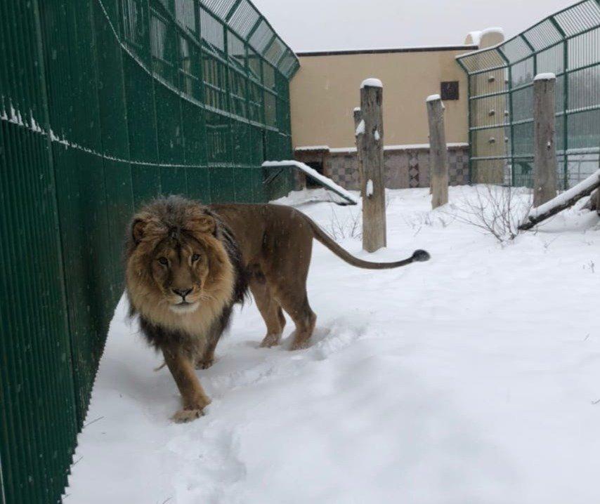 Обитатели Белгородского зоопарка рады декабрьскому снегу , фото-3