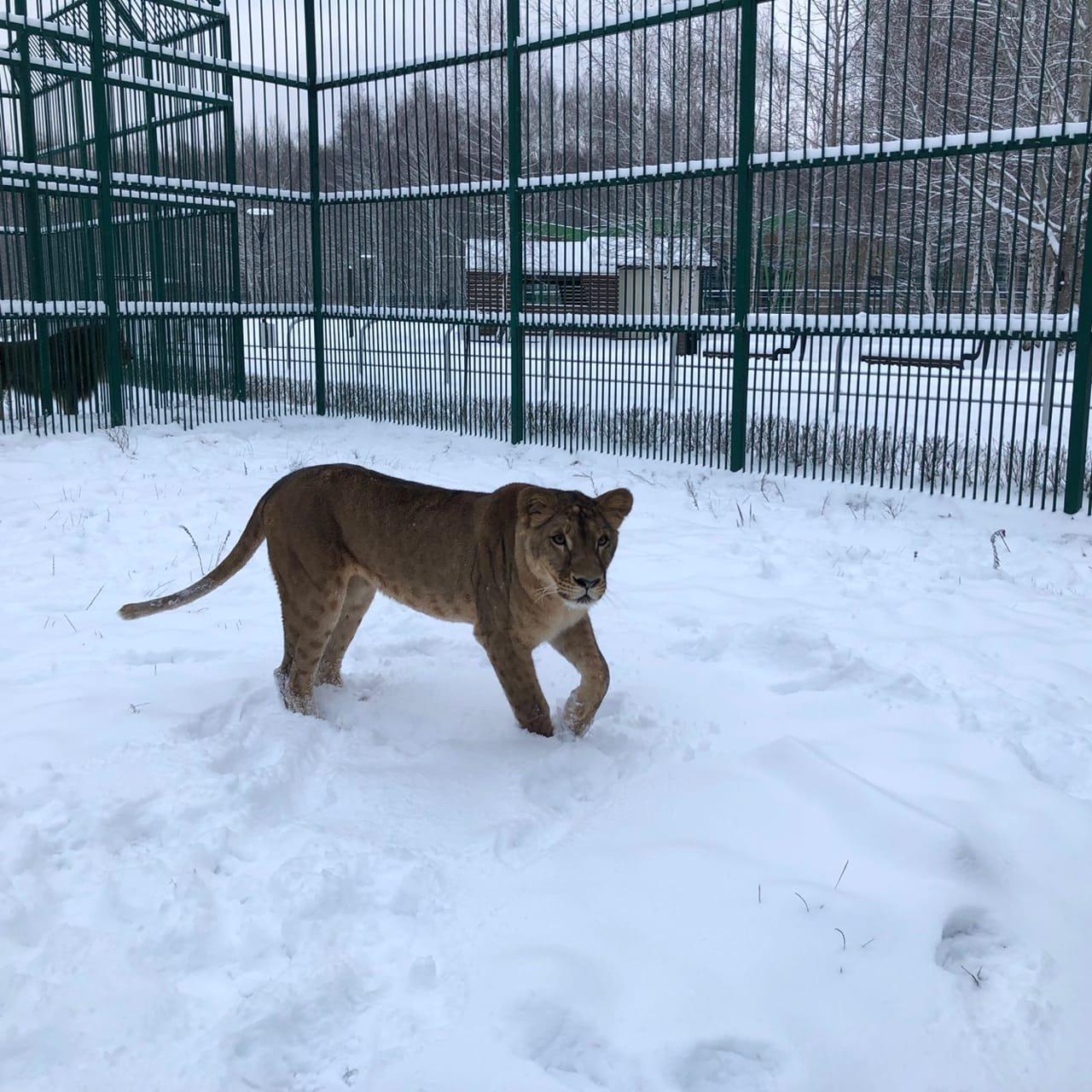 Обитатели Белгородского зоопарка рады декабрьскому снегу , фото-2
