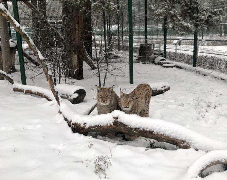 Обитатели Белгородского зоопарка рады декабрьскому снегу , фото-4