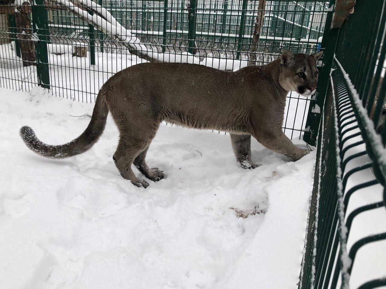 Обитатели Белгородского зоопарка рады декабрьскому снегу , фото-1