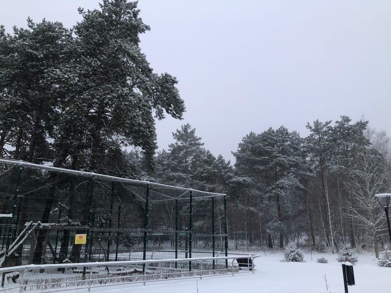 Обитатели Белгородского зоопарка рады декабрьскому снегу , фото-6