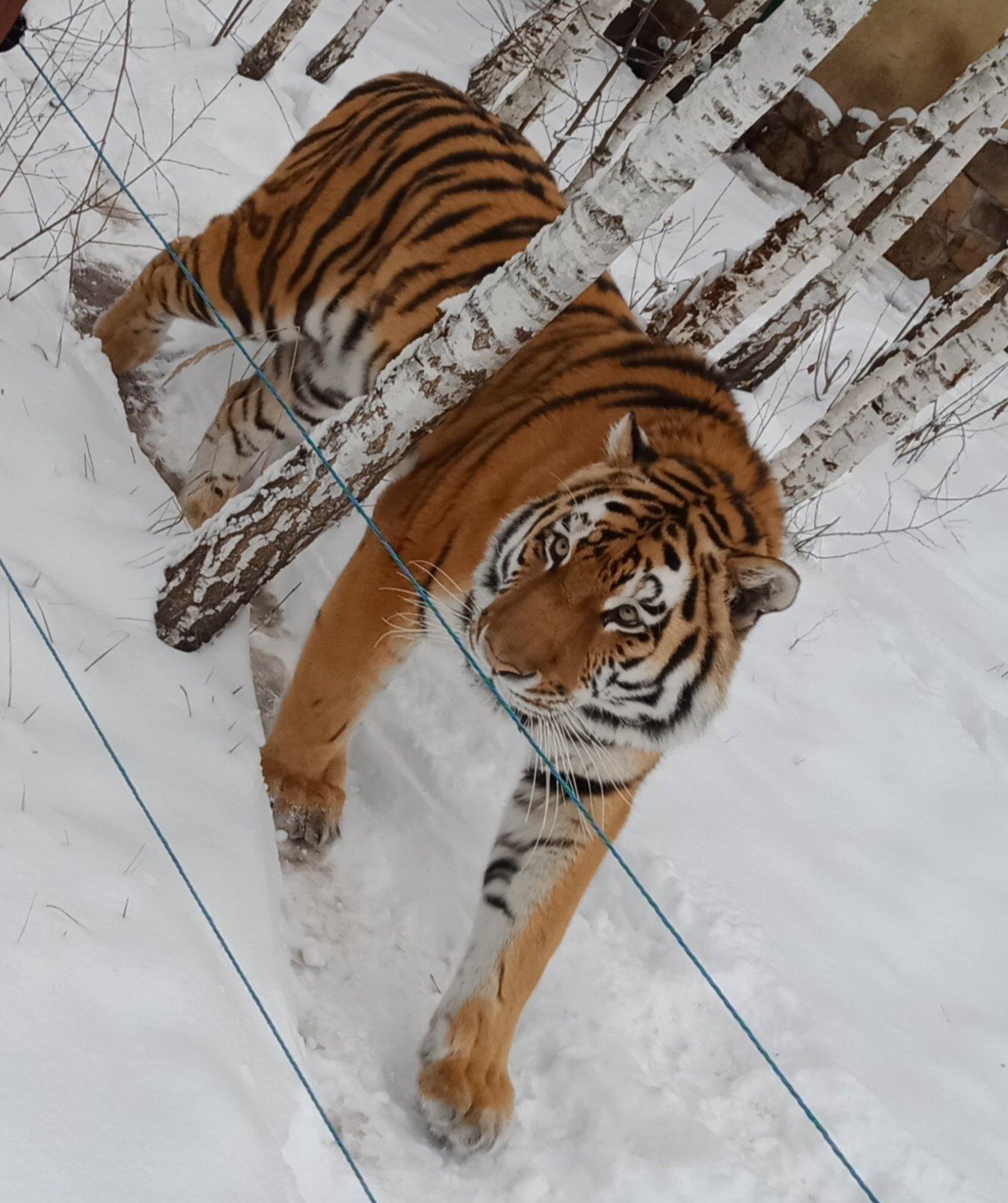 Обитатели Белгородского зоопарка рады декабрьскому снегу , фото-7