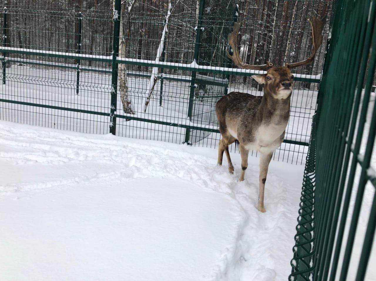 Обитатели Белгородского зоопарка рады декабрьскому снегу , фото-5