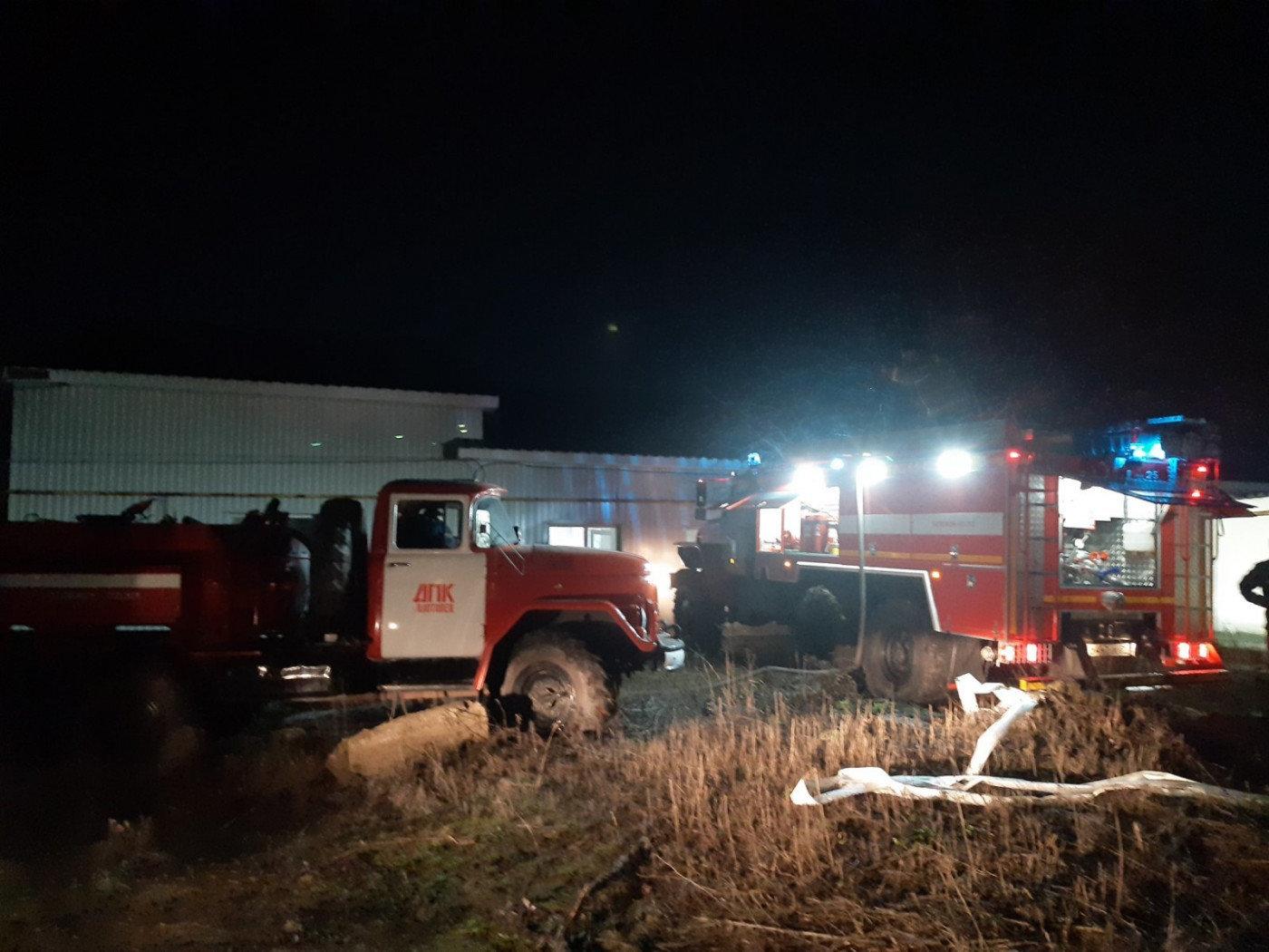 В пожаре на свинокомплексе в Короче погибли 300 свиноматок, фото-1