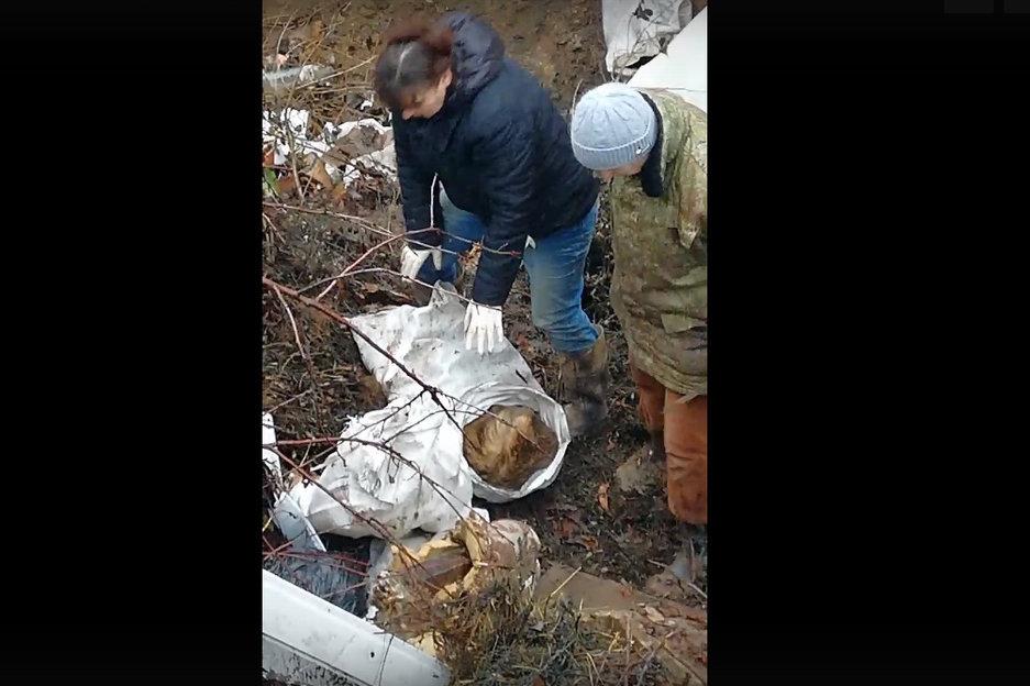 Под Белгородом обнаружили свалку с трупами собак, фото-2