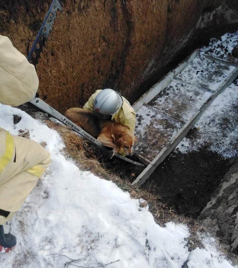 В Вейделевке спасатели достали из строительного котлована собаку, фото-2