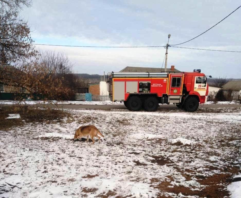 В Вейделевке спасатели достали из строительного котлована собаку, фото-3