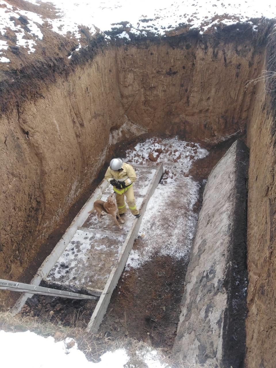 В Вейделевке спасатели достали из строительного котлована собаку, фото-1