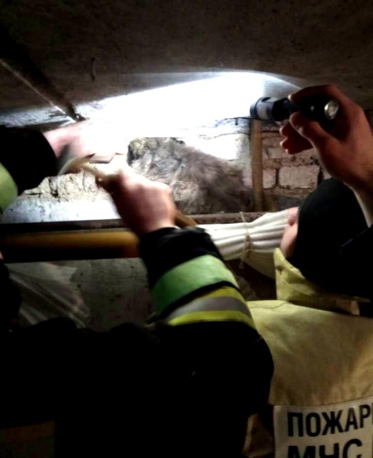 В Губкине пожарные спасли кошку, застрявшую в трубе, фото-1, Фото: пресс-служба Главного управления МЧС по Белгородской области