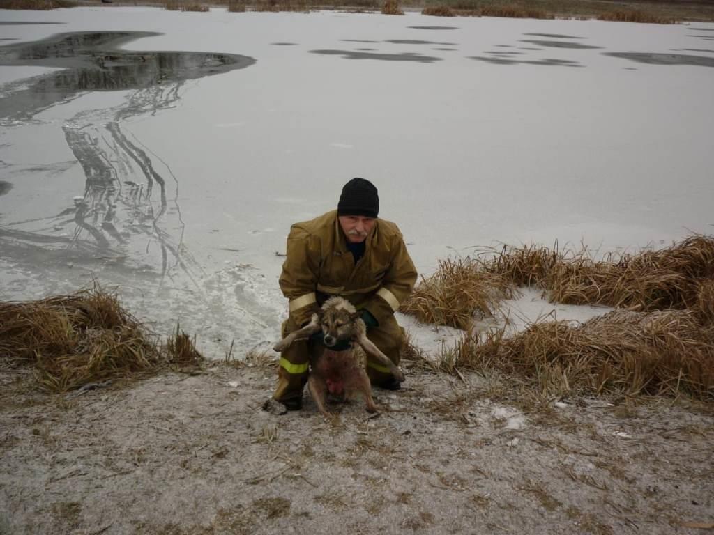 В Томаровке спасли провалившуюся под лёд собаку, фото-3