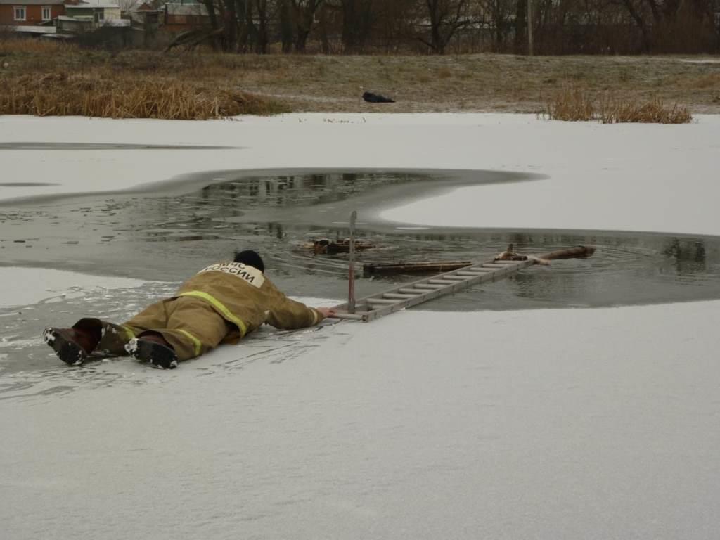 В Томаровке спасли провалившуюся под лёд собаку, фото-1