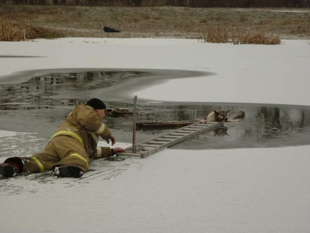 В Томаровке спасли провалившуюся под лёд собаку, фото-2