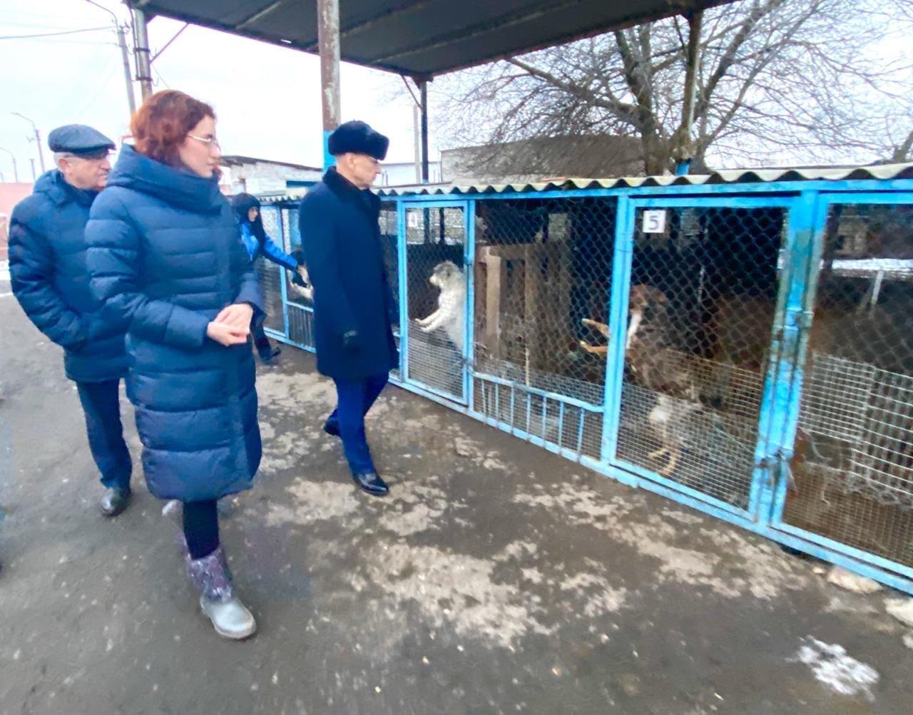 Мэр Белгорода: Реконструировать пансионат безнадзорных животных нет смысла , фото-2
