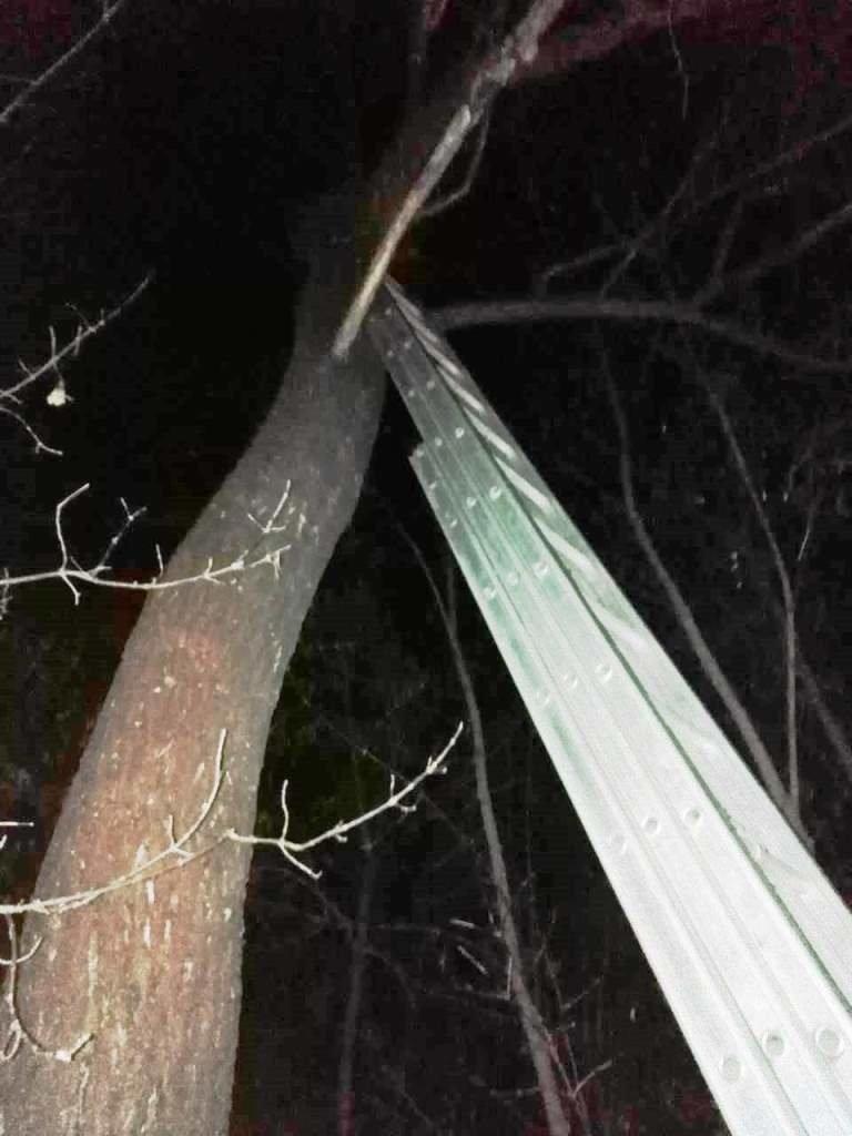 В Вейделевке спасли застрявшего на дереве кота, фото-1