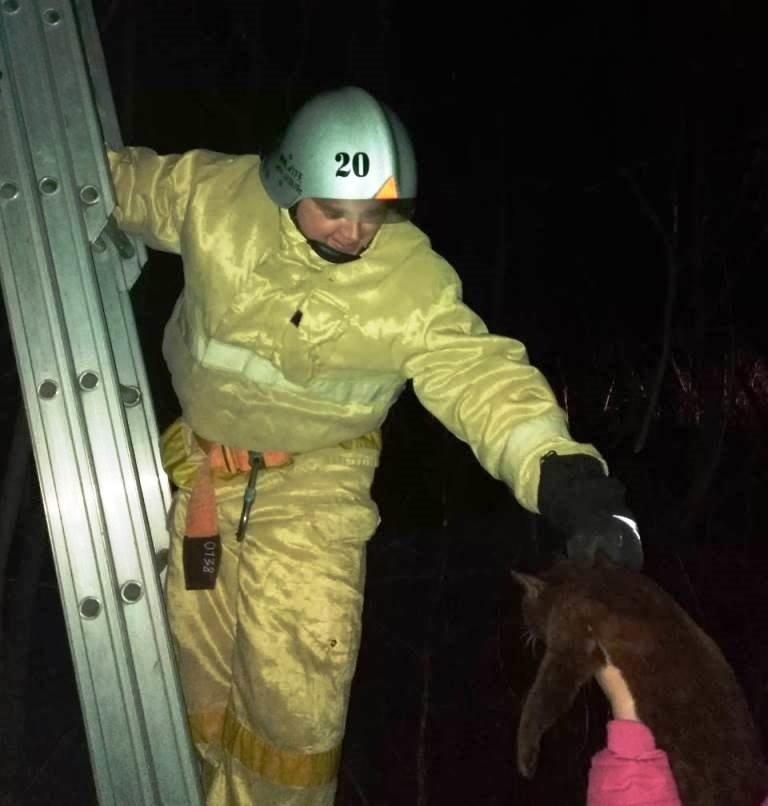 В Вейделевке спасли застрявшего на дереве кота, фото-2