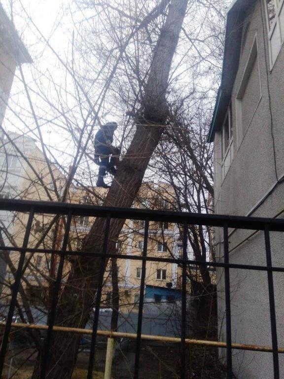 Под Белгородом спасли провалившуюся в колодец собаку, фото-2