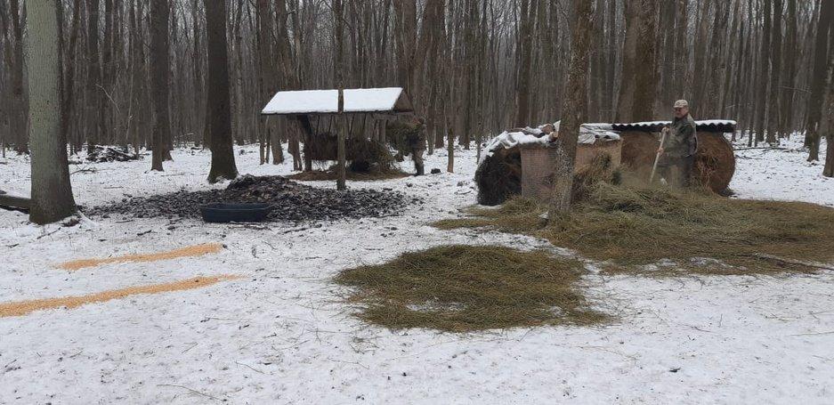 В Белгородских лесах установили кормушки для диких животных, фото-1