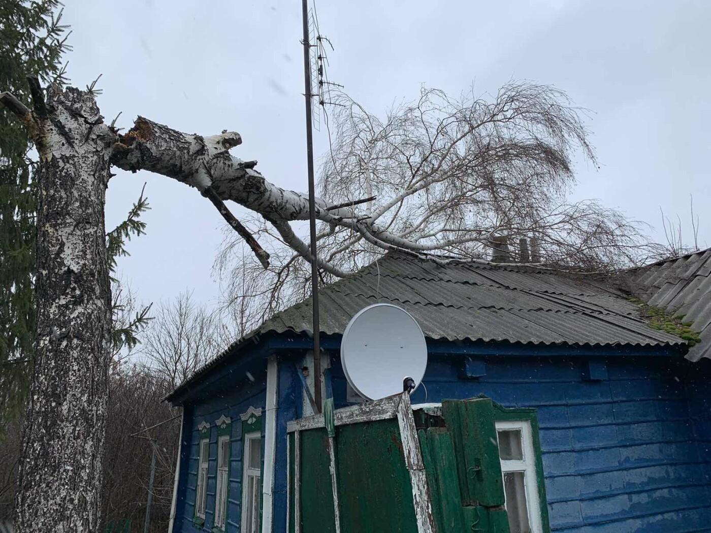 В Белгороде ещё три авто придавило рухнувшим деревом, фото-2