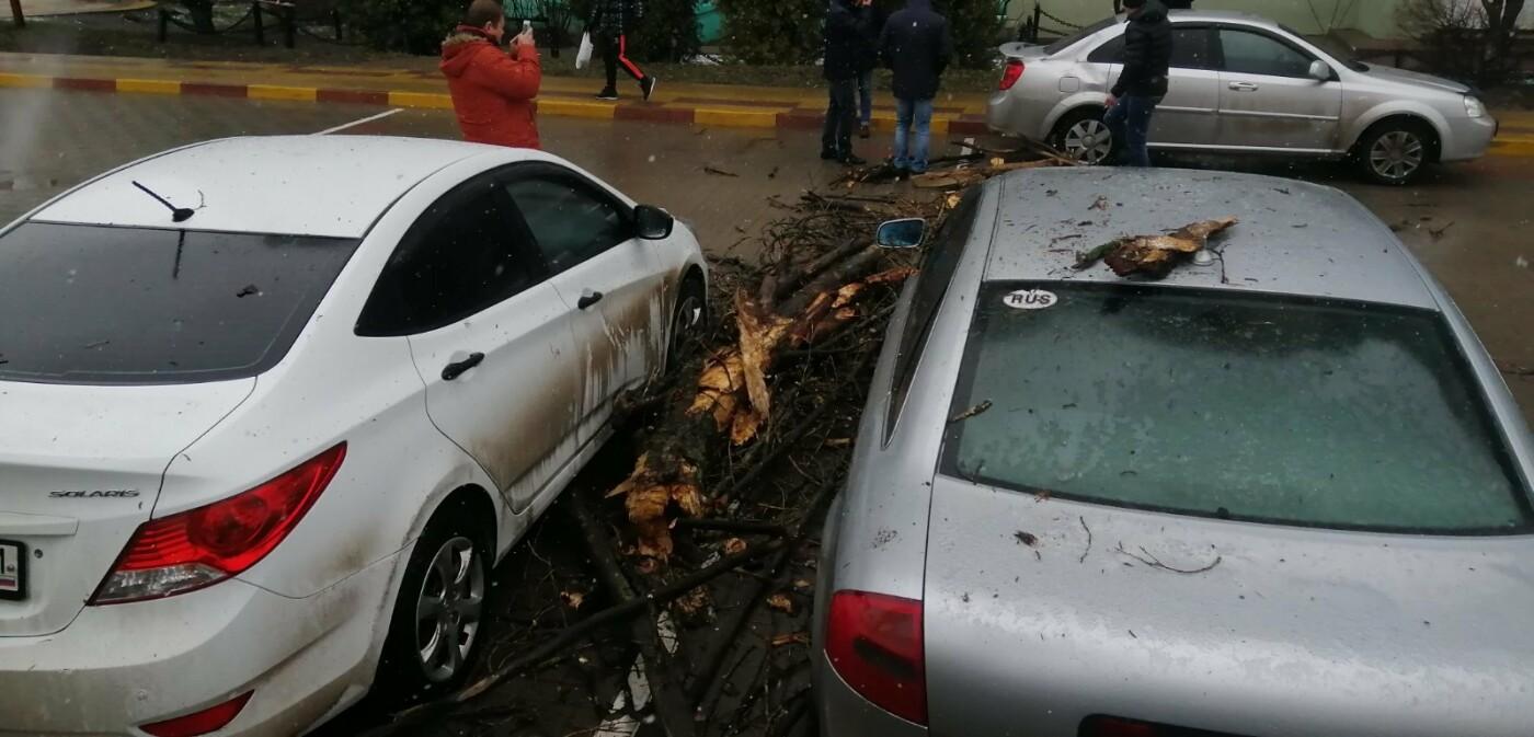 В Белгороде ещё три авто придавило рухнувшим деревом, фото-1