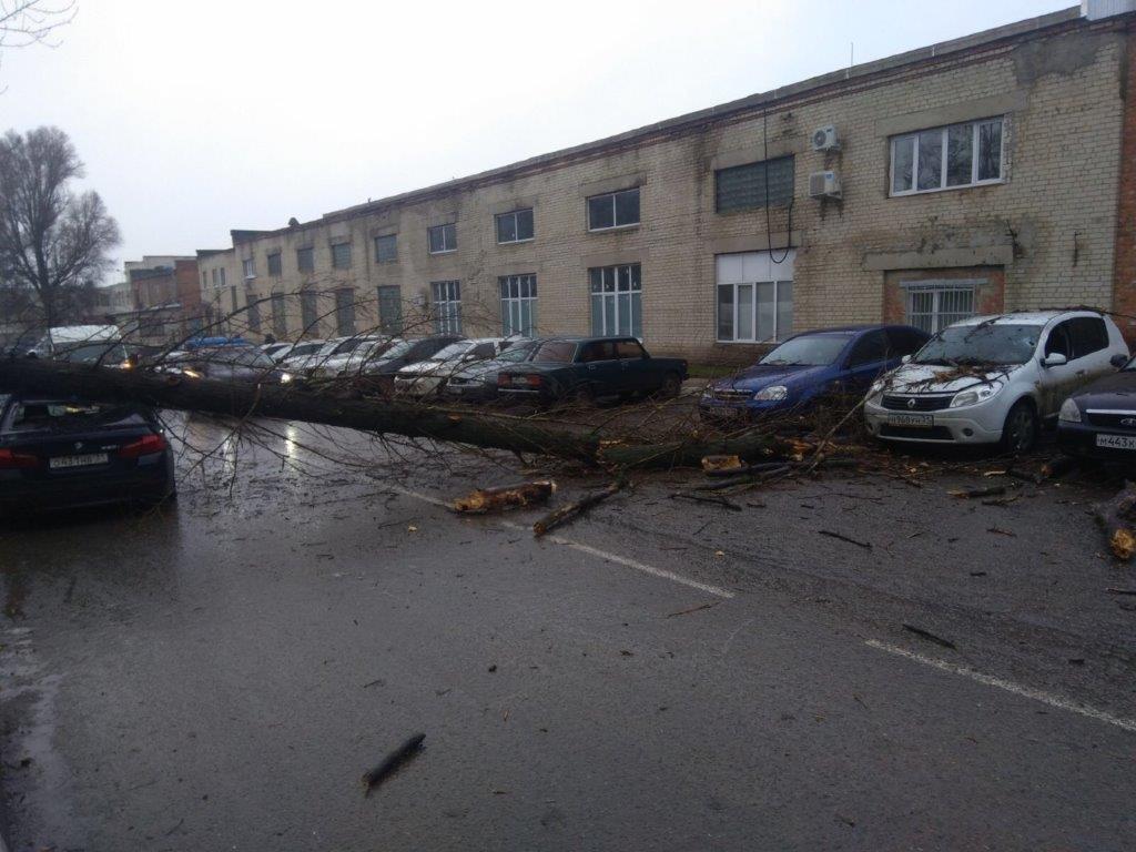 В Белгороде ещё три авто придавило рухнувшим деревом, фото-3
