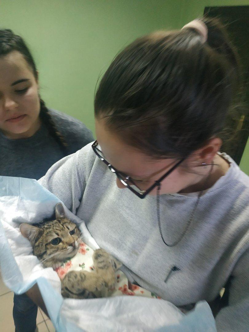 Белгородские зоозащитники провели акцию по льготной стерилизации домашних животных, фото-3