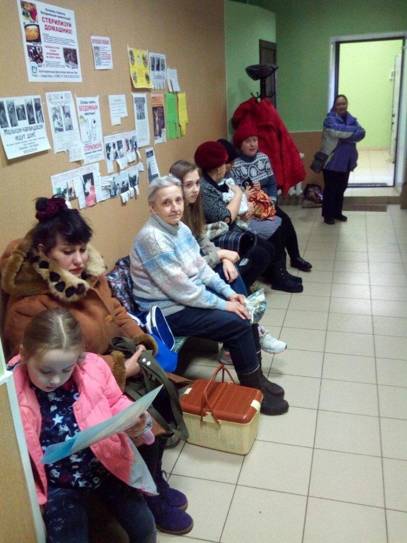 Белгородские зоозащитники провели акцию по льготной стерилизации домашних животных, фото-5
