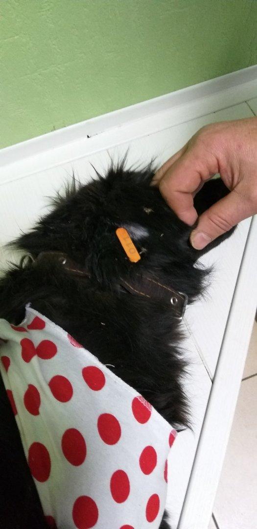 Белгородские зоозащитники провели акцию по льготной стерилизации домашних животных, фото-7
