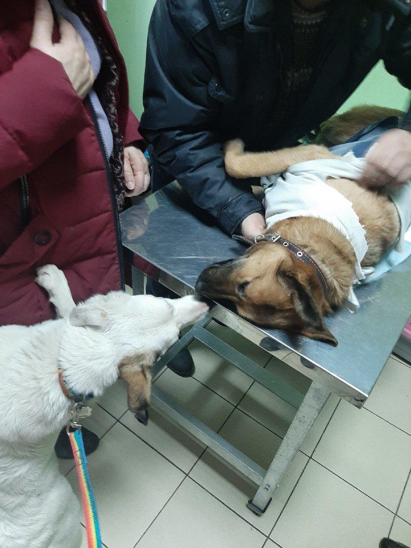 Белгородские зоозащитники провели акцию по льготной стерилизации домашних животных, фото-10