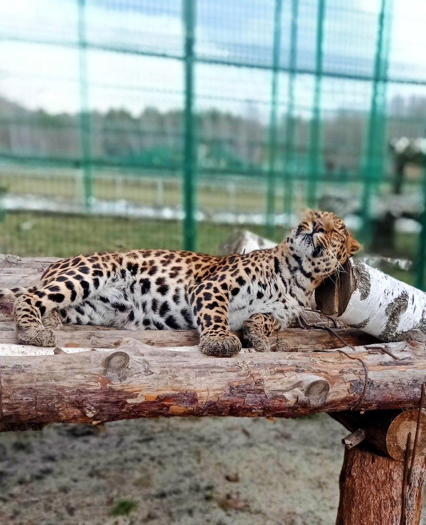 Точно весна. В зоопарке Белгорода медведи вышли из спячки, фото-3