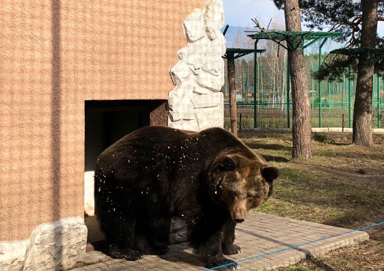 Точно весна. В зоопарке Белгорода медведи вышли из спячки, фото-1