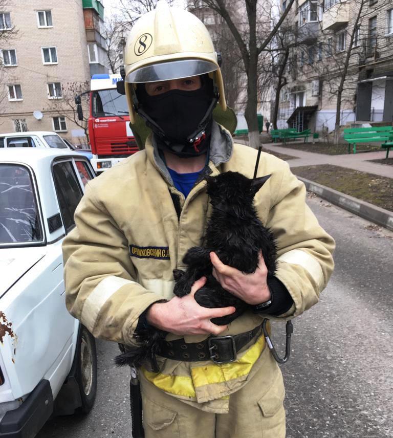 В Губкине пожарные спасли застрявшего на дереве котёнка, фото-1