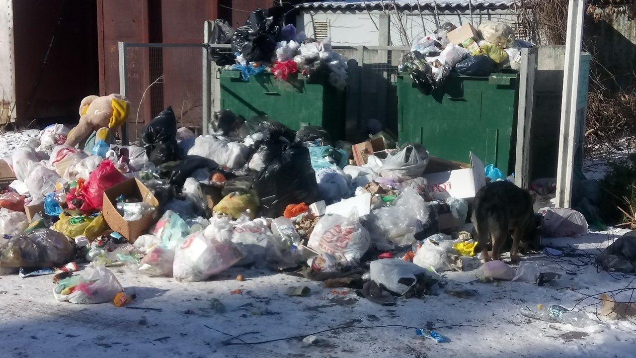 Белгородский мусорный оператор запускает в «осиротевшие» районы свою спецтехнику, фото-1