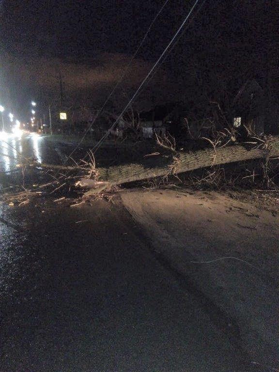 В Белгородской области штормовой ветер повалил деревья и оборвал провода, фото-1
