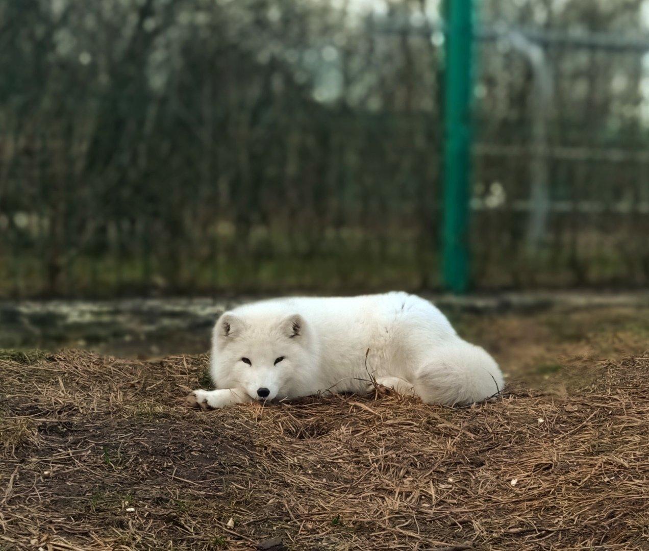 Белгородский зоопарк откроется через две недели, фото-4