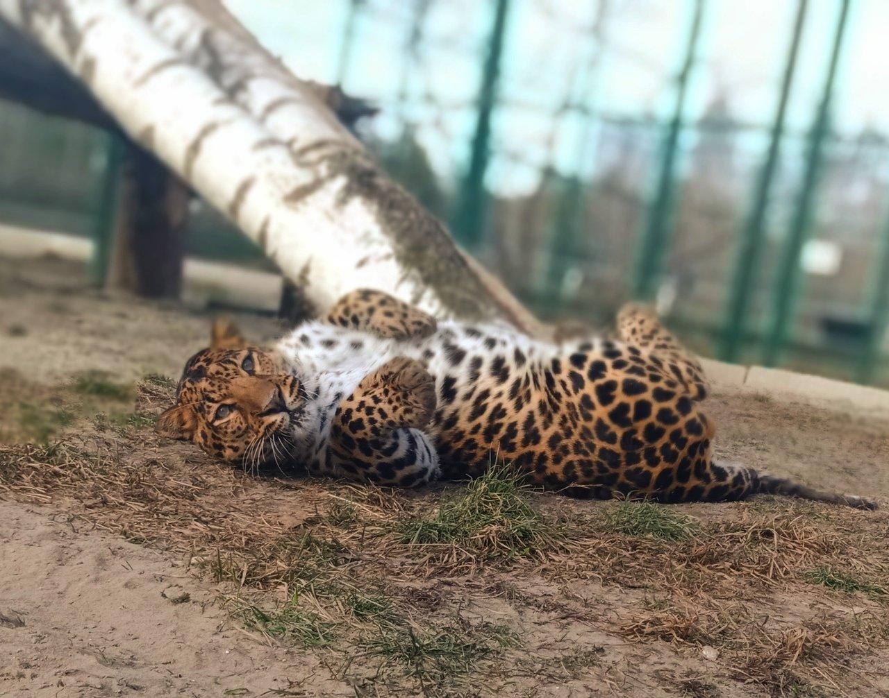 Белгородский зоопарк откроется через две недели, фото-5