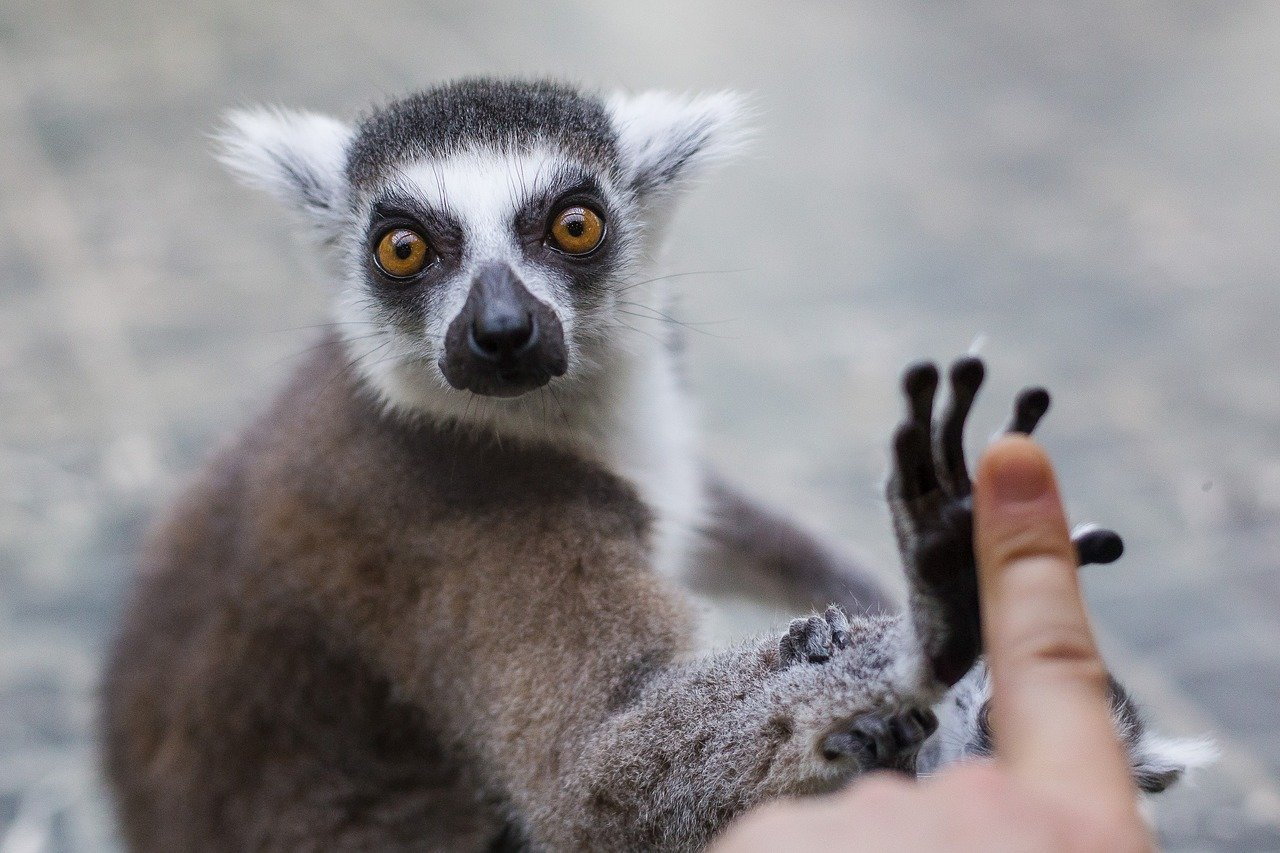 Белгородский зоопарк откроется через две недели, фото-3