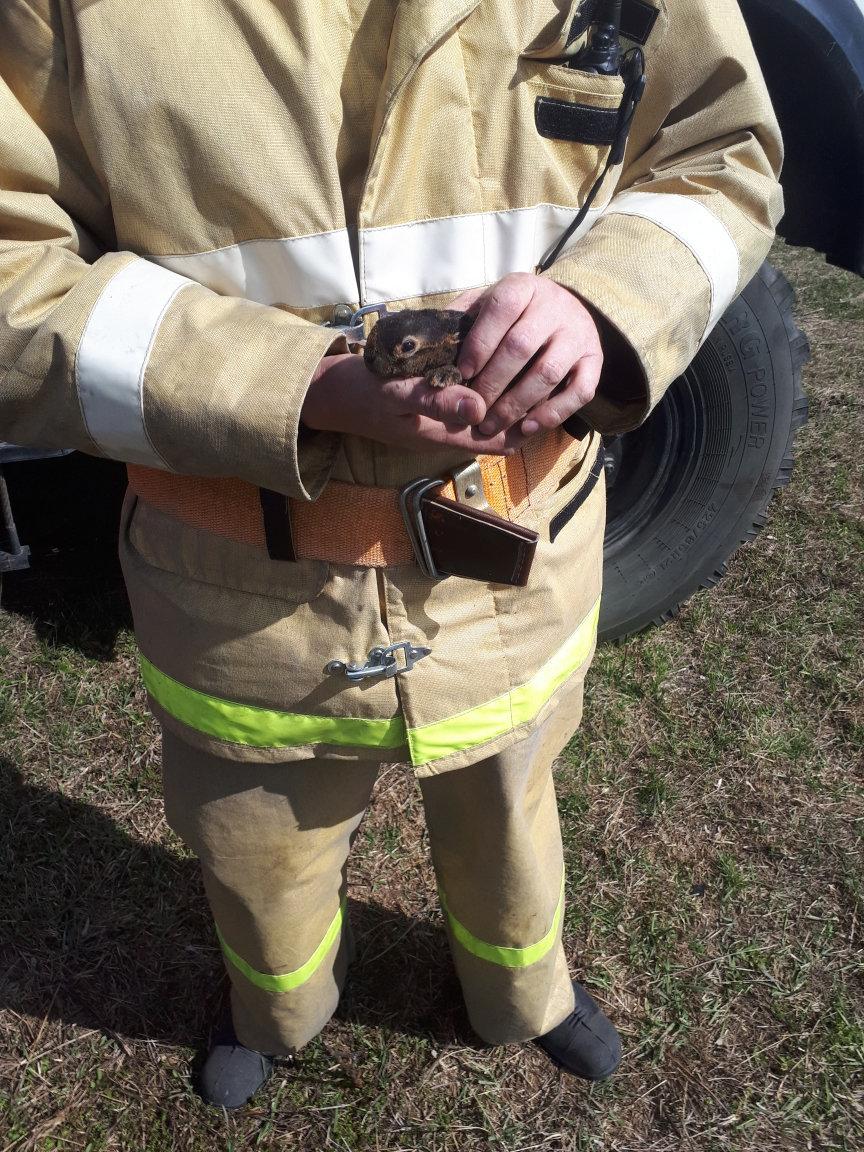Белгородский пожарный спас едва не сгоревшего в траве зайчонка, фото-1