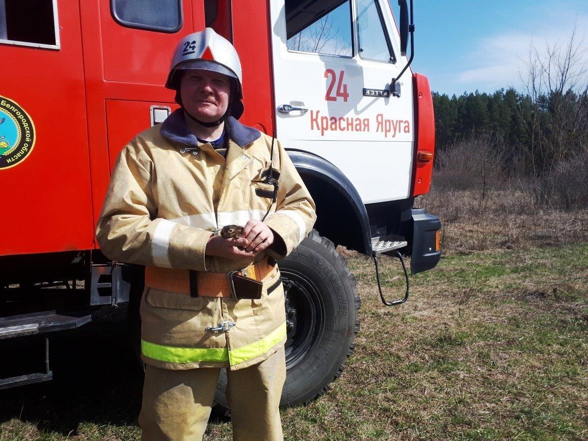 Белгородский пожарный спас едва не сгоревшего в траве зайчонка, фото-2