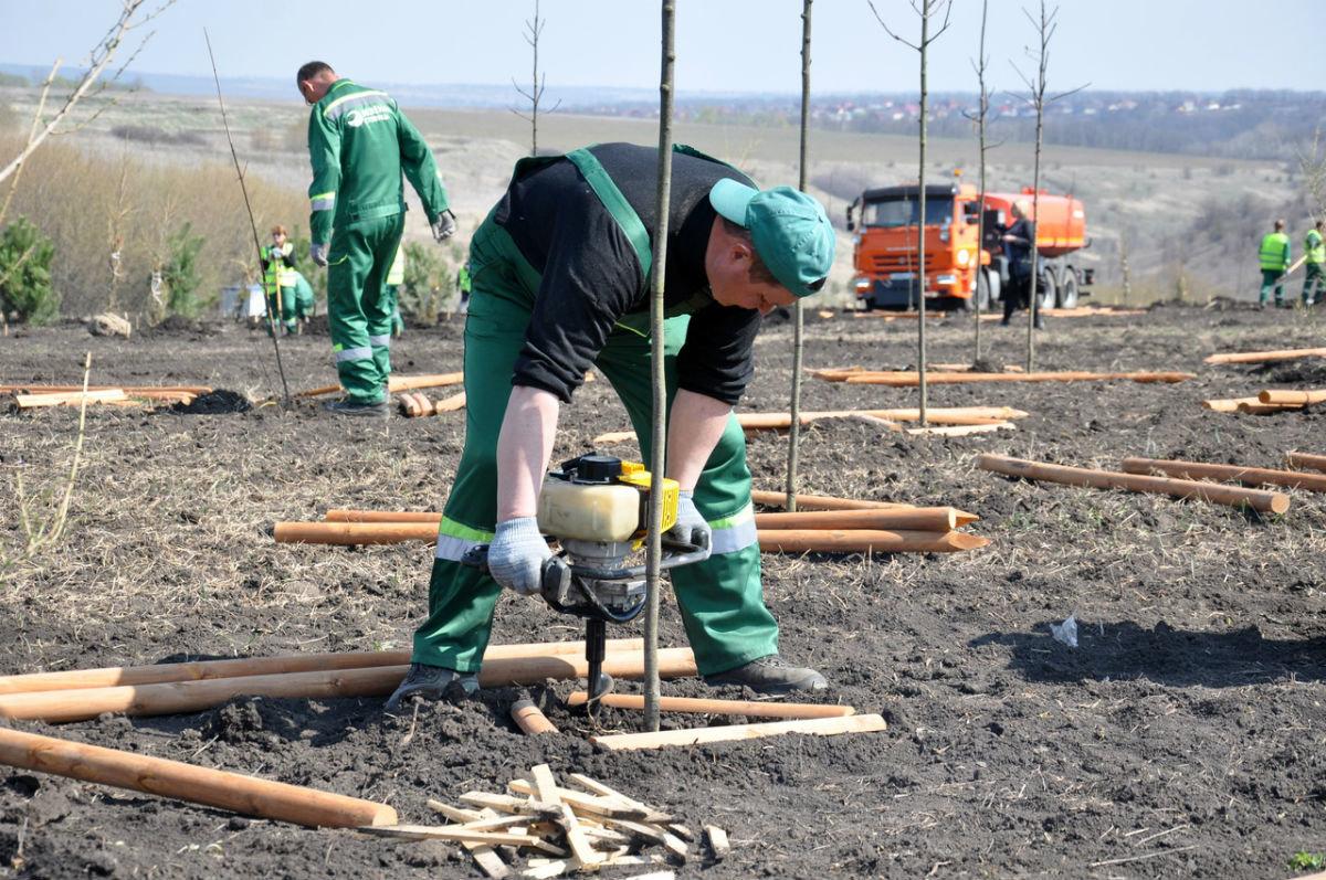 В Белгородской области позеленеют дорожные кольца, фото-3