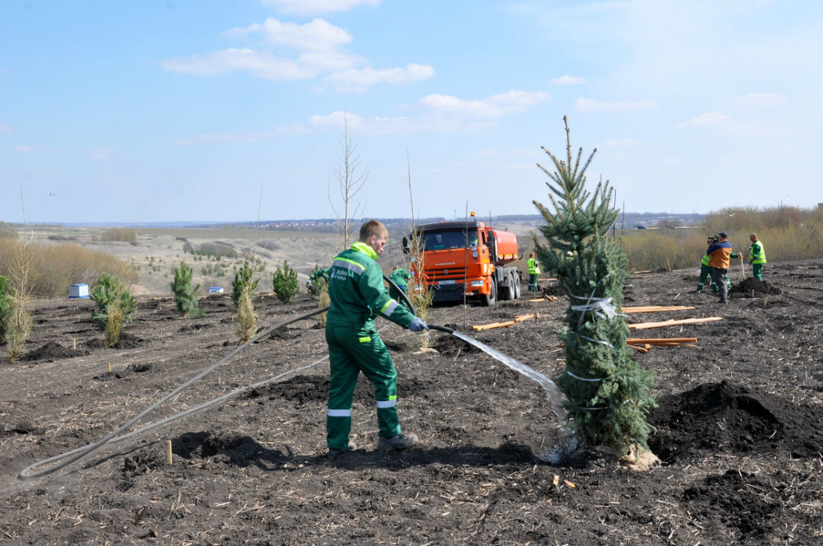 В Белгородской области позеленеют дорожные кольца, фото-7