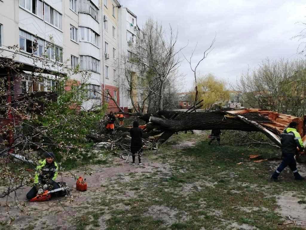 В Белгороде поваленное ветром дерево повредило 4 авто , фото-1
