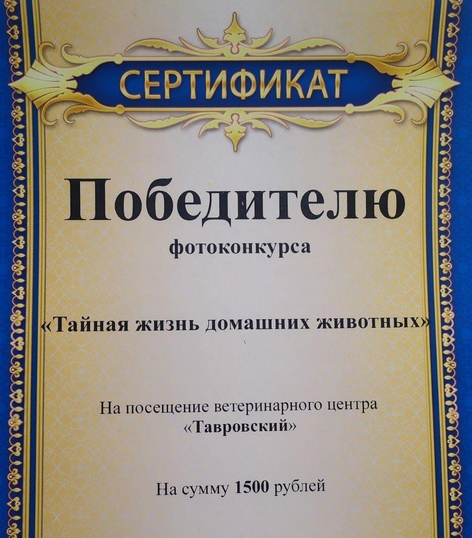 Кот-именинник и Барсик-часовой завоевали сердца белгородцев. Подведены итоги фотоконкурса Go31, фото-2