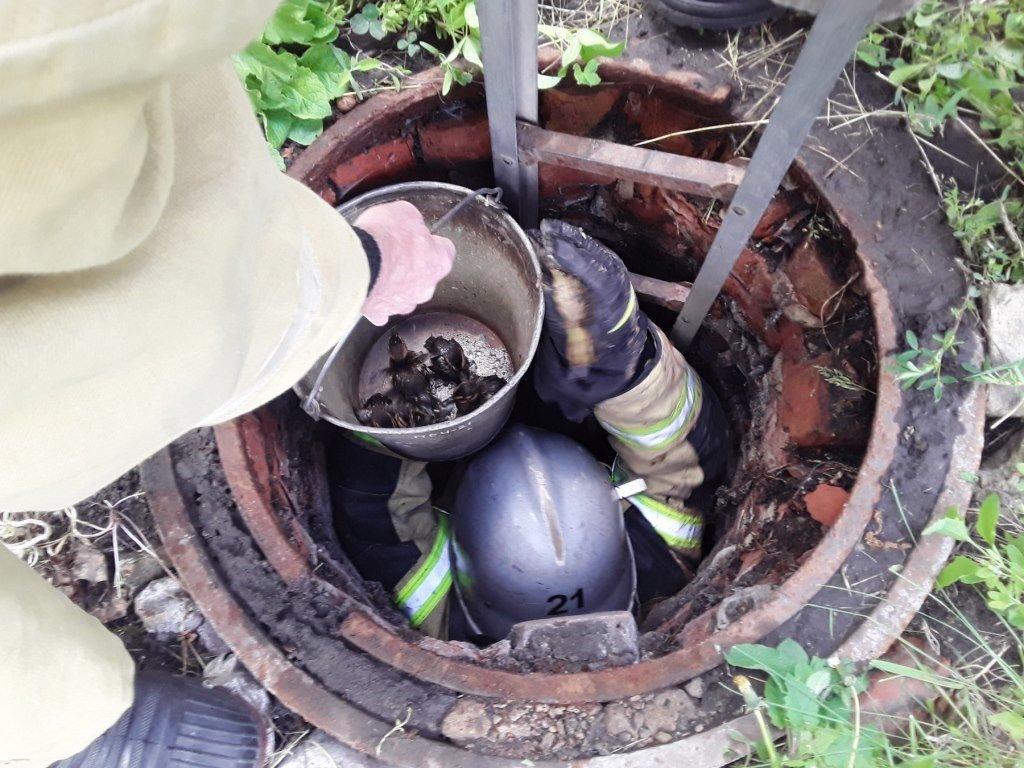 В Волоконовке спасли провалившихся в колодец диких утят, фото-2