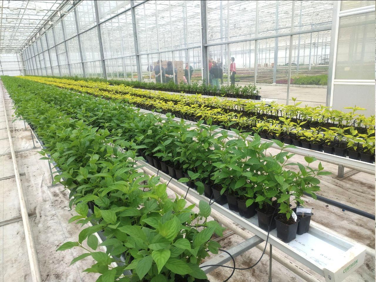 Юрий Галдун: Будем стараться выращивать в городе многолетники, фото-3