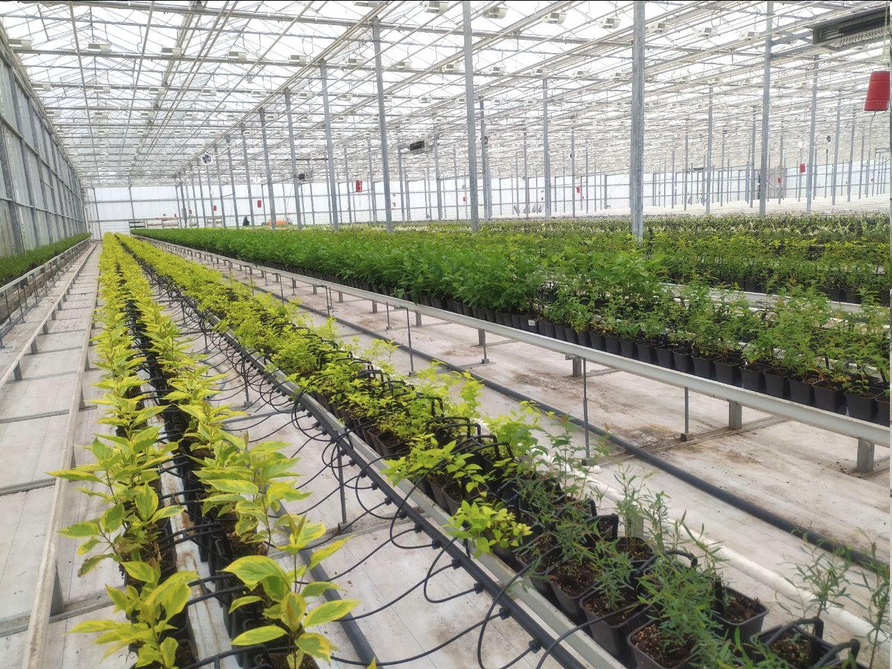 Юрий Галдун: Будем стараться выращивать в городе многолетники, фото-2