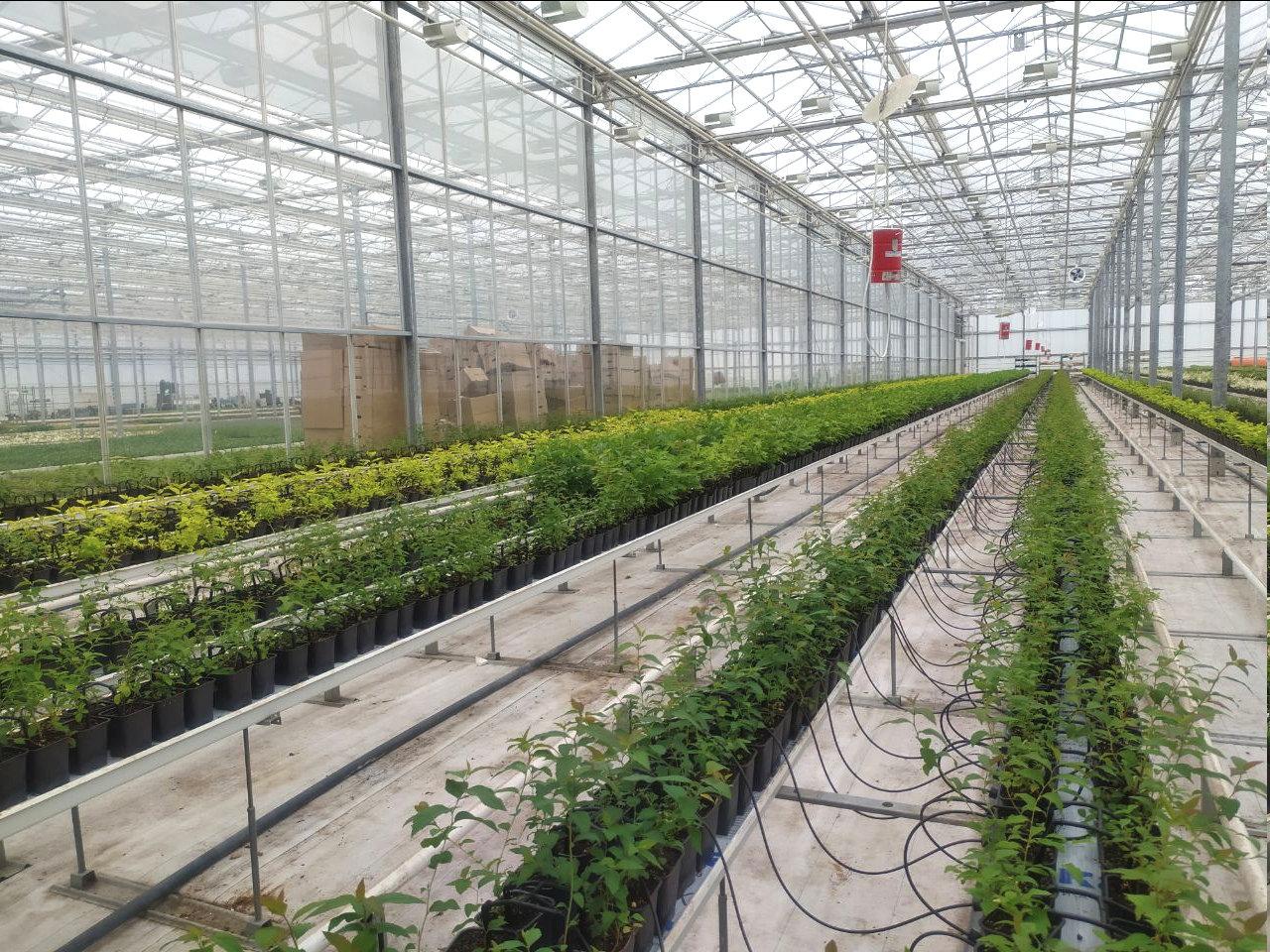 Юрий Галдун: Будем стараться выращивать в городе многолетники, фото-1