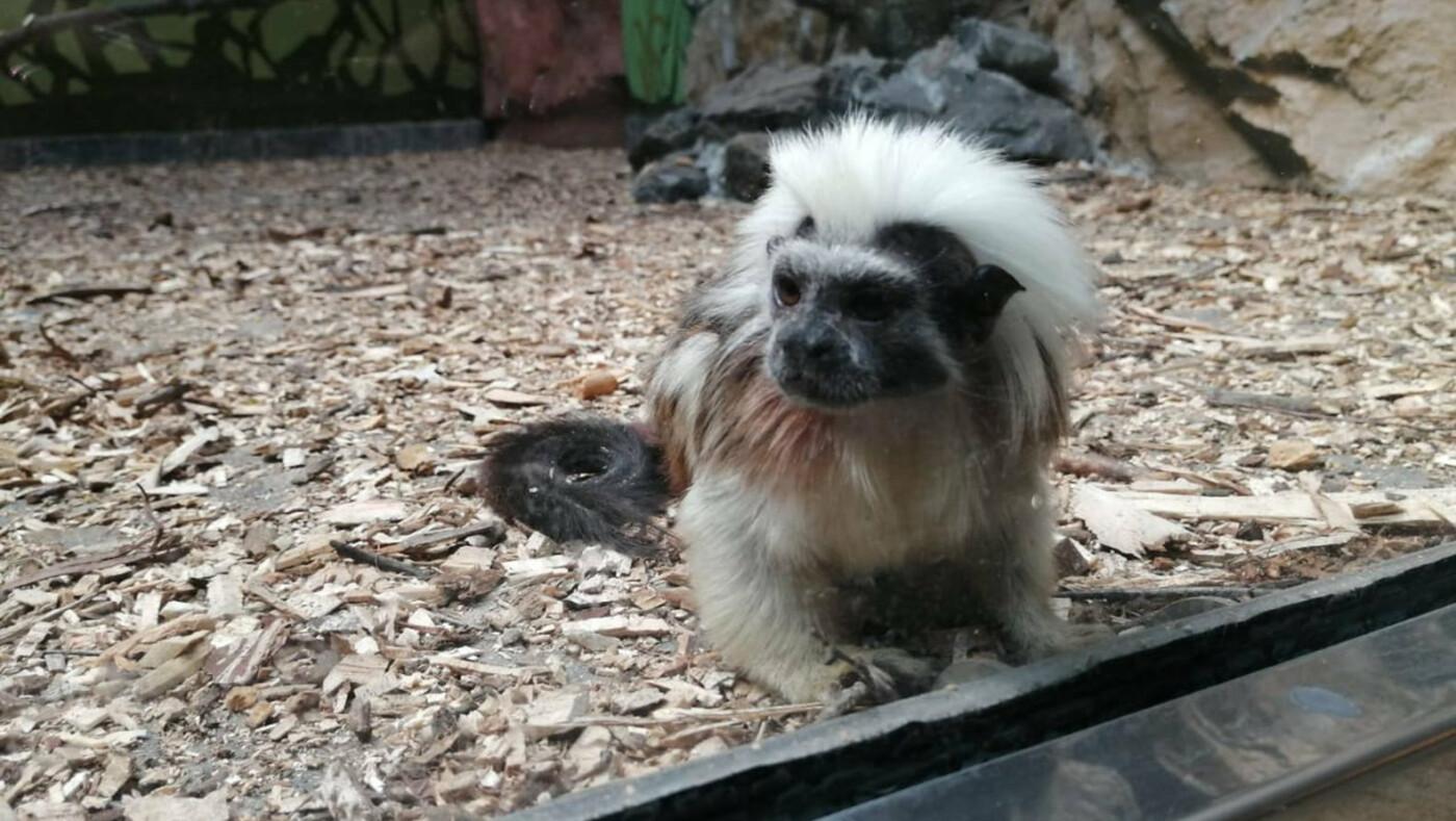 Белгородский зоопарк предлагает придумать имена новым питомцам, фото-1