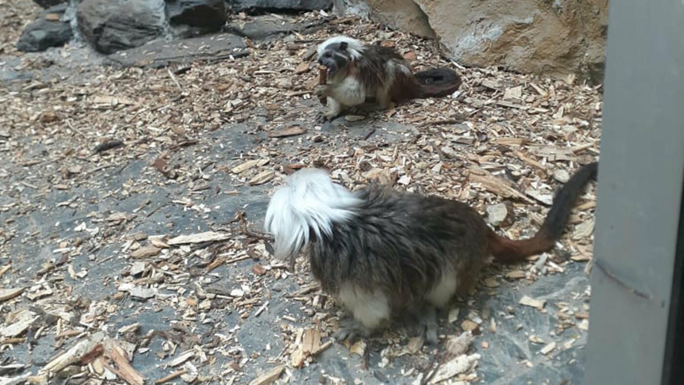 Белгородский зоопарк предлагает придумать имена новым питомцам, фото-2