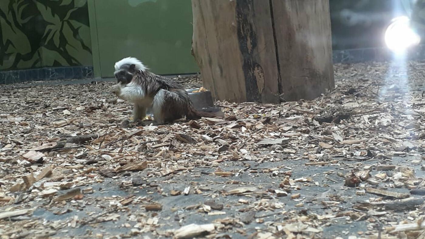 Белгородский зоопарк предлагает придумать имена новым питомцам, фото-3