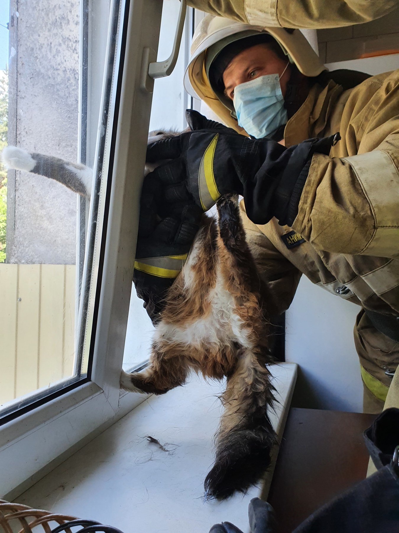 В Новом Осколе спасли застрявшую в оконной раме кошку, фото-2